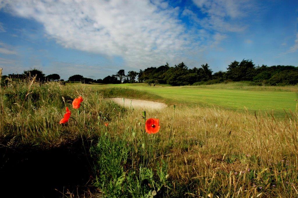 Amapolas en el de golf de Seapoint en Irlanda